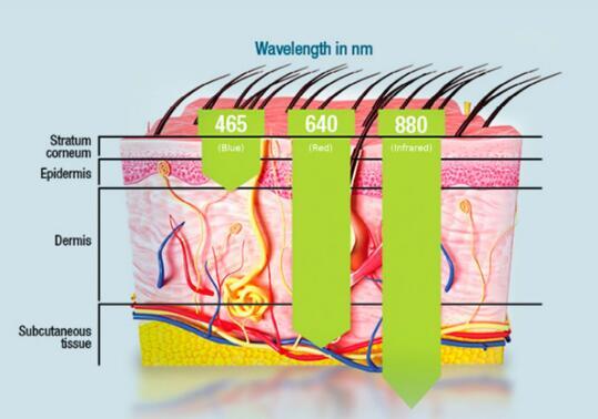 Depth of Light Energy Penetration